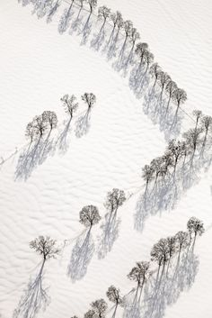 Klaus LEIDORF :: Contemplation, 2009 [Luftbild von Baumreihen im Schnee] Aerial Photography, Nature Photography, Shadow Tree, Shadow Play, Foto Poster, Photocollage, Snow Scenes, All Nature, Winter Trees