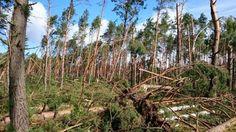 Leśnicy z terenu szczecińskiej dyrekcji Lasów Państwowych zakończyli wstępną inwentaryzację szkód wyrządzonych przez huraganowe wiatry, które przeszły przez tamtejsze lasy na początku września.