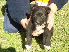 ACE Animal Care España - Noor