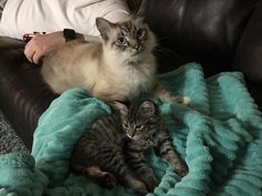Got her a little friend earlier this week so she doesnt have to be lonely while we are at work. by tylereckert cats kitten catsonweb cute adorable funny sleepy animals nature kitty cutie ca