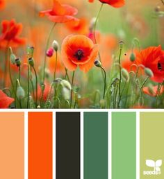 Every shade of rainbow which can be used in food, beverage, pharmaceutical products,etc. Our products are extracted from herbs & plants. It's 100% natural.