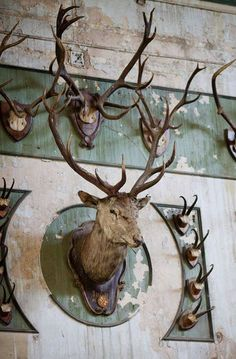 """Rustic accessories in design: From Rizzoli's """"Taxidermy"""". Taxidermy Decor, Deer Mounts, Interior And Exterior, Interior Design, Trophy Rooms, Boho Home, English Style, Deer Antlers, Elle Decor"""