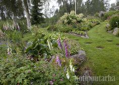Puutarhan kulkuväylät voivat olla myös pehmeästä nurmesta. Voiko mikään muu tuntua niin ihalta paljaissa varpaissa? www.kotipuutarha.fi