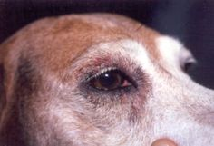 Justice For Dogs Reportedly Held Captive, Beaten and Mutilated – ForceChange