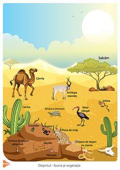 Easy Animal Drawings, Desert Animals, Moroccan Art, Easy Animals, Quito, Fauna, Habitats, Children, Kids
