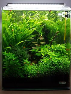 Freshwater tanks are a lot easier to maintain than a saltwater aquarium. The fresh water fish may not be easy to keep but the set up is a lot less complicated, Aquascaping, Aquarium Aquascape, Betta Aquarium, Planted Aquarium, Aquarium Landscape, Live Aquarium Plants, Nature Aquarium, Aquarium Design, Nano Cube