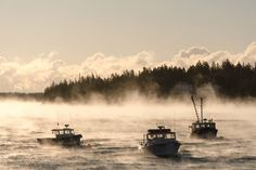 """Down East Magazine Page Liked · 1 hr ·   """"Sea Smoke on the Fox Island Thoroughfare - From left to right: F/V Ledgehammer, Katherine, F/V Ocean Rider."""" (Photo Credit: sethgmacy; Facebook share by """"Down East"""" magazine)"""