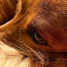 """So that's a close-up of my face. The human got a new camera. So I'm her test subject. #Maximus #photograph #closeupshot #closeup #eye #camera #iphone6s #iphone6scamera #apple #adopted #adorable #shelterdog #rescuedogsofinstagram #dog #dogs #dogsofinstagram #puppy #puppiesofinstagram #muttskickbutt #mutt #muttsofinstagram #pet #petsofinstagram #mongrel #INdog #instadog #instapet #instapup #ilovemypuppy by maximus_thebrave Follow """"DIY iPhone 6/ 6S Cases/ Covers/ Sleeves"""" board on…"""