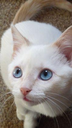 yavru-kedinin-mucize-hayatta-kalma-hikayesi-9