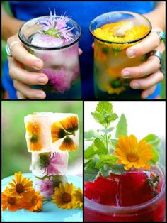 Top Ten Medicinal Herbs for the Garden - Calendula flowers in ice cubes and as a garnish