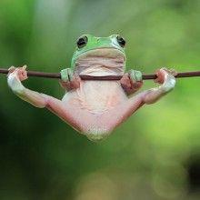 Tiny Tree Frog, Indonesia