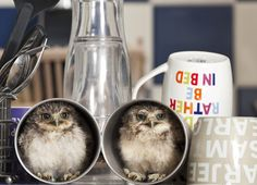 Two of my favourite things - owls and cups of tea - never thought I'd see the two together!!