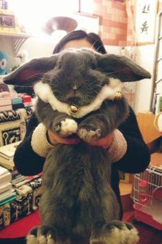 My momma loves her big fluffy bunny! Giant Bunny, Big Bunny, Cute Baby Bunnies, Fluffy Bunny, Lop Bunnies, Flemish Giant Rabbit, Baby Animals, Cute Animals, Beautiful Rabbit