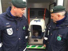 Nisa: GNR recolhe lontra debilitada e com problemas de visão | Portal Elvasnews