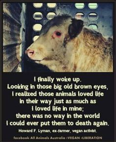 Lives cut short by the meat/dairy/egg industries. Please go #VEGAN. howdoigovegan.com