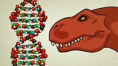 HOW DNA LEADS TO THE MAKING OF A WHOLE ORGANISM.  Genetic code, amino acids, proteins, transcription and translation are reviewed.  Well animated and narrated.  5:24 minutes.