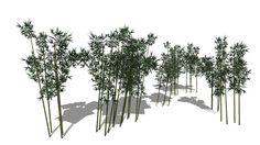 Bamboo - 3D Warehouse