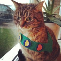 Girl scout kitty
