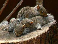 Squirrel pile