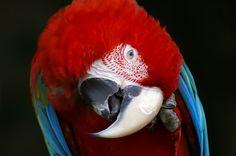 Nice portrait. #cute #parrot #bird