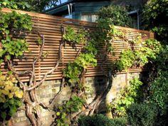 great backyard privacy fence design ideas to get inspired 11 Garden Privacy, Backyard Privacy, Garden Fencing, Garden Trellis, Pergola Patio, Pergola Plans, Slatted Fence Panels, Privacy Fence Designs, Walled Garden
