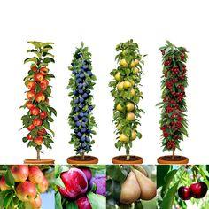Set de 4 ou 8 Arbres Fruitiers - Pommes,Prunes, Poires,Cerises.