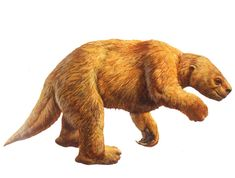 Harlan's Ground Sloth image from the La Brea Tar Pits website.