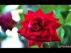 Wind of Memory - CrisVola - Acoustic Spanish Solo Guitar Music - MEMORY
