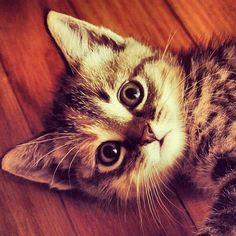 #Cats #Cat #Kittens #Kitten #Kitty #Pets #Pet #Meow #Moe #CuteCats #CuteCat #CuteKittens #CuteKitten #MeowMoe Cutest pic ever! ... https://www.meowmoe.com/31136/