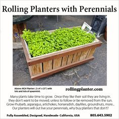"""Grow Perennials Year Round.  M24 ( 2 x 4' x 25"""" ) RollingPlanter is ideal for growing perennials.  Did you know many vegetables, herbs and berries are perennials and don't need to be planted every year?  Asparagus, artichokes, strawberries, rhubarb are just a few that don't need to be planted yearly.   If you live in a too cold of climate, roll your RollingPlanter inside.  RollingPlanters are built to go over thresholds and other hard to get over transition areas.   www.RollingPlanter.com"""