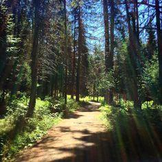 Nature #zen #naturelovers #seenonmyrun #runner #trailrunner #summertime