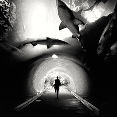 """wow...walking """"through"""" a shark tank [in black and white]."""