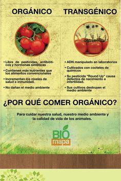 ¿Por qué elegir lo natural? Los alimentos orgánicos elevan la calidad de #vida.  Está comprobado que una alimentación más saludable, sin aditivos químicos, prolonga tus días y cuida tu organismo. Cuando compres frutas, verduras y hortalizas asegúrate de que sean 100% orgánicas, con cero preservativos. Así tienes bienestar garantizado. #CacaoSalud  Infografía de http://www.biomapaperu.com/wp-content/uploads/2013/08/organico.vs_.transgenico.jpg