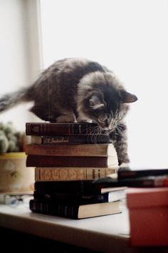 My someday house definitely includes books and a cat!