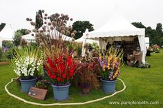 Jacques Amand International have a super stand at the RHS Wisley Flower Show…