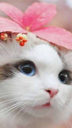 List Of Cute Animals To Draw, Cats And Kittens Getting Along. Cats And Kittens For Sale In Great Yarmouth Cute Baby Cats, Cute Cats And Kittens, Cute Little Animals, Cute Funny Animals, I Love Cats, Kittens Cutest, Orange Kittens, Wallpaper Gatos, Cute Cat Wallpaper