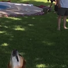 New trending GIF on Giphy. funny dog cute fail lol aww afv whoops frisbee. Follow Me CooliPhone6Case on Twitter Facebook Google Instagram LinkedIn Blogger Tumblr Youtube