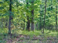 Almost 1 ACRE near the water in the Country Club Estates I section of beautiful Waterwood. Great place to build your full-time or weekend dream home with plenty of lovely shade trees Subdivision access to the lake  PRIVATE golf course for property owners and their guests.