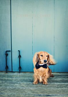 Nantucket Dog Photography Charlotte Carey Photography