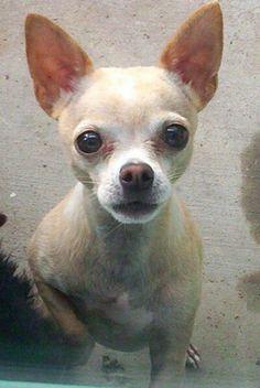Cujo - - my little lover.