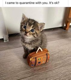 Going on a trip - your daily dose of funny cats - cute kittens - pet memes - pets in clothes - kitty breeds - sweet animal pictures - perfect photos for cat moms Cute Little Animals, Cute Funny Animals, Funny Cute, Cute Dogs, Animal Jokes, Funny Animal Memes, Cat Memes, Cute Cats And Kittens, Baby Cats