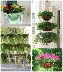 Image result for plants in pots ideas