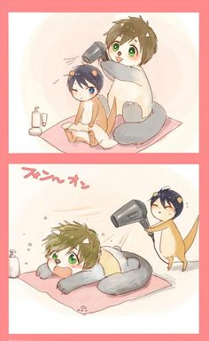 Ahaha, Haru still has to learn how to properly use a hairdryer ... From mennraku ... Free! - Iwatobi Swim Club, haruka nanase, haru nanase, haru, nanase, haruka, river otter, free!, iwatobi, makoto tachibana, makoto, tachibana, sea otter