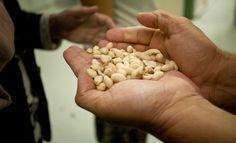 Alimentos terapéuticos: una esperanza contra la desnutrición