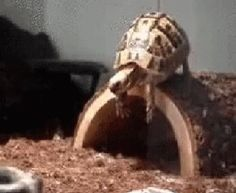 Funny Animals GIF - turtle