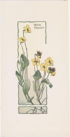 Viola (Violaceae) Artist: Elizabeth Hallowell Saunders (1861-1910) Date: c. 1900 Media: Print Collection: Santa Barbara Botanic Garden