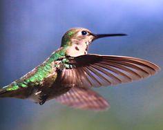 Close up of hummingbird.