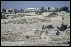 Mt. of Olives, Jerusalem: view from the west of the ancient Jewish cemetery.