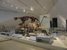 O que fazer em Toronto - Helena Mattos | Royal Ontario Museum