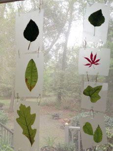 Get leaves from the back yard and from trees and trails. Types of leaf art installment. Et ça pourrait être un jeu ext. De fam. = en 10 min. Trouver ces feuilles ou faire une charte de points et selon l'item ramassé = tant de points